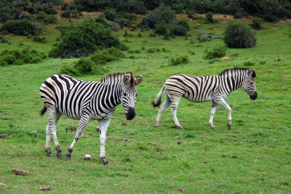 seeproja Addon kansallispuistossa