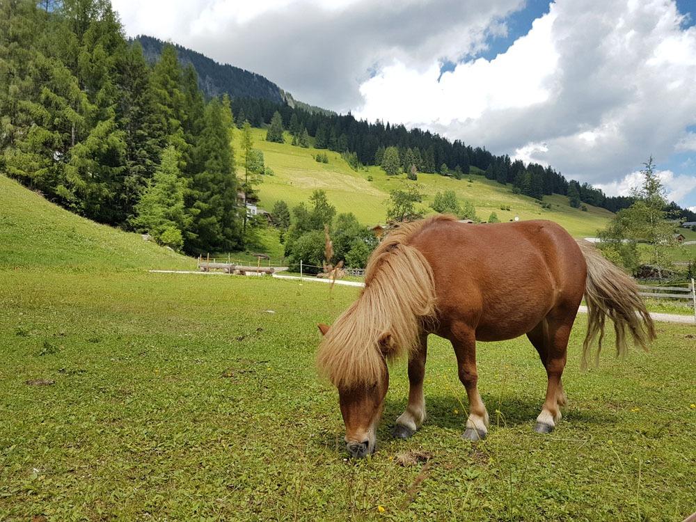 Pieni hevonen Alta Badiassa Dolomiiteilla