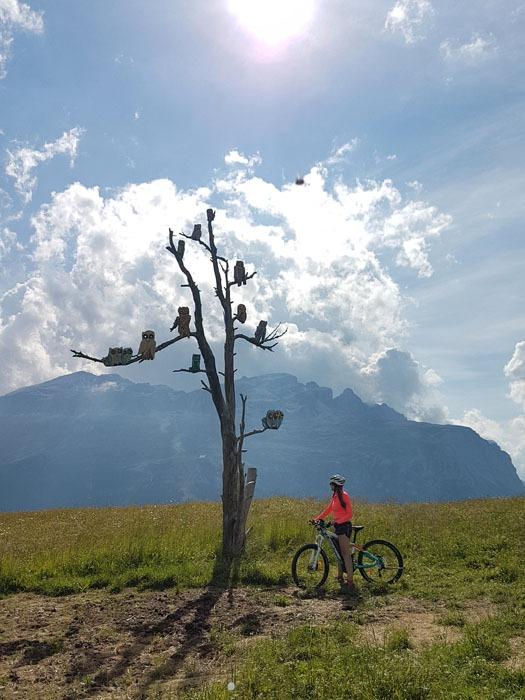 Pöllöpuu löytyi pyöräretkellä Dolomiiteilla