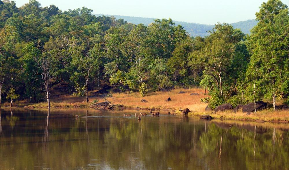Peuroja safarilla Intiassa