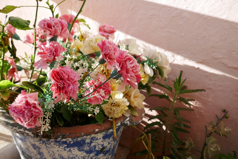 kukkaruukku Alicanten vanhassakaupungissa