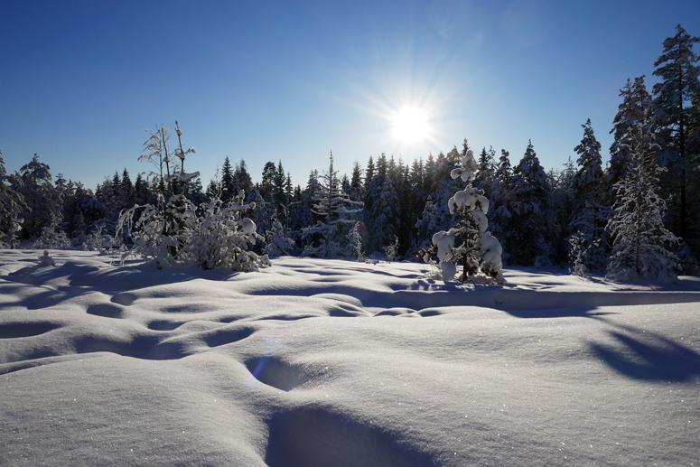 Aurinko paistoi Korpinkierroksella Nuuksiossa.