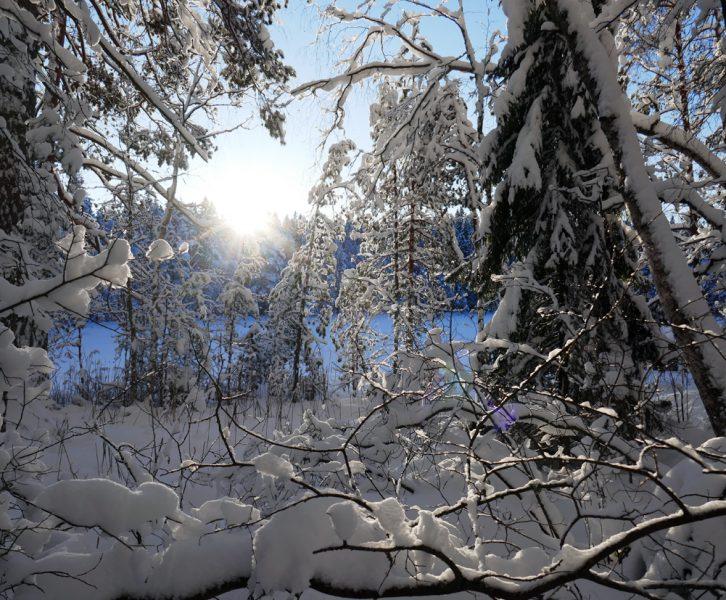 Aurinko paistoi Nuuksiossa Korpinkierroksella.