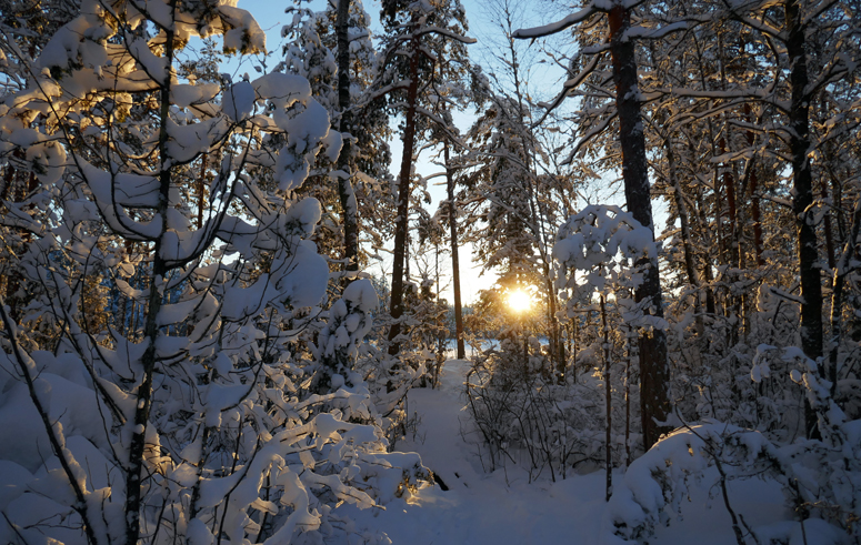 auringonlasku Nuuksiossa