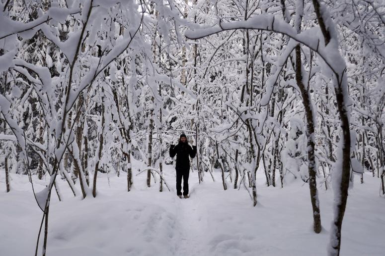 Paloheinän metsässä Helsingissä