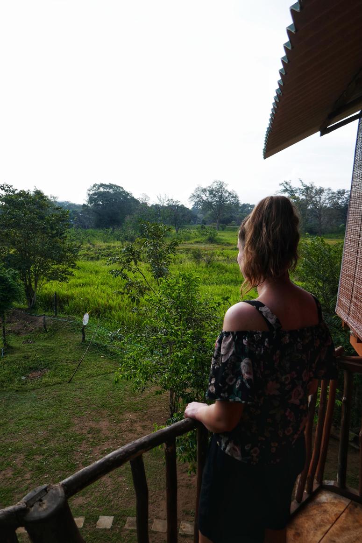 puumajassa Sri Lankassa