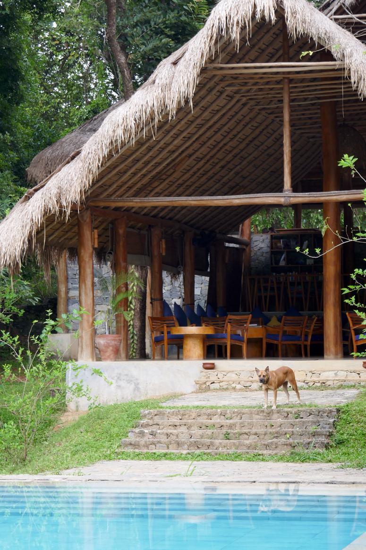 Gal Oya Eco Lodgen koira Arak