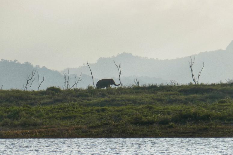 urosnorsu Gal Oyan kansallispuistossa Sri Lankassa