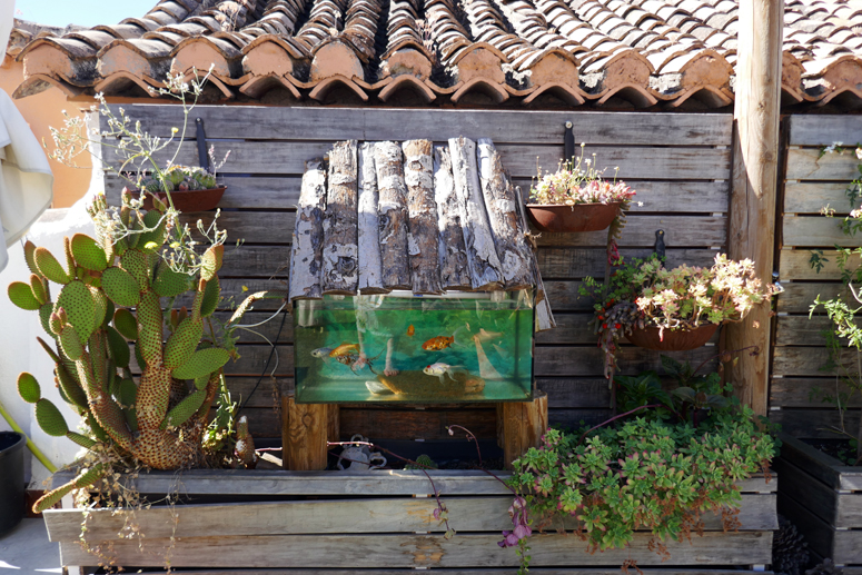 Kattoterassin kasveja Granadassa