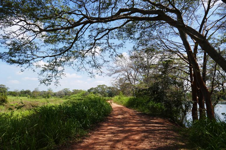 kaunista maaseutua Sri Lankan Habaranassa
