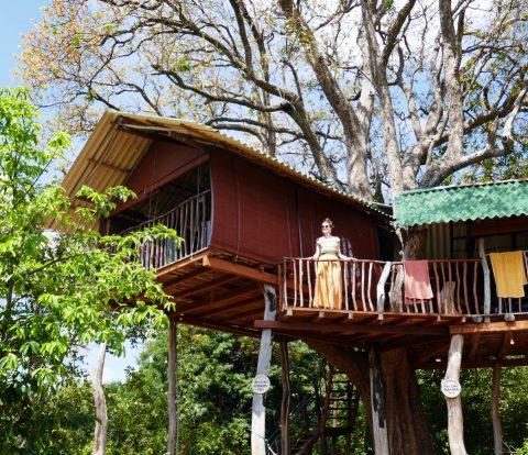 Puumamajoitus Sri Lankan Habaranassa lähellä Sirigiyaa