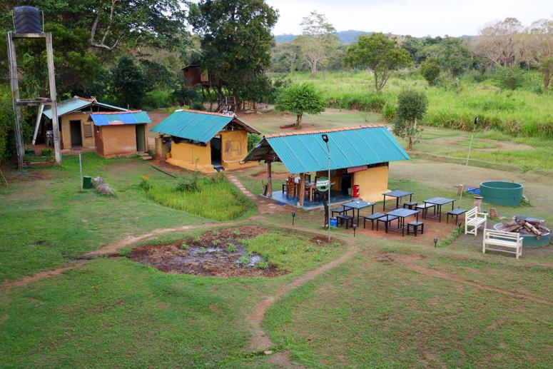 puumajan pihapiiri Sri Lankan Habranassa