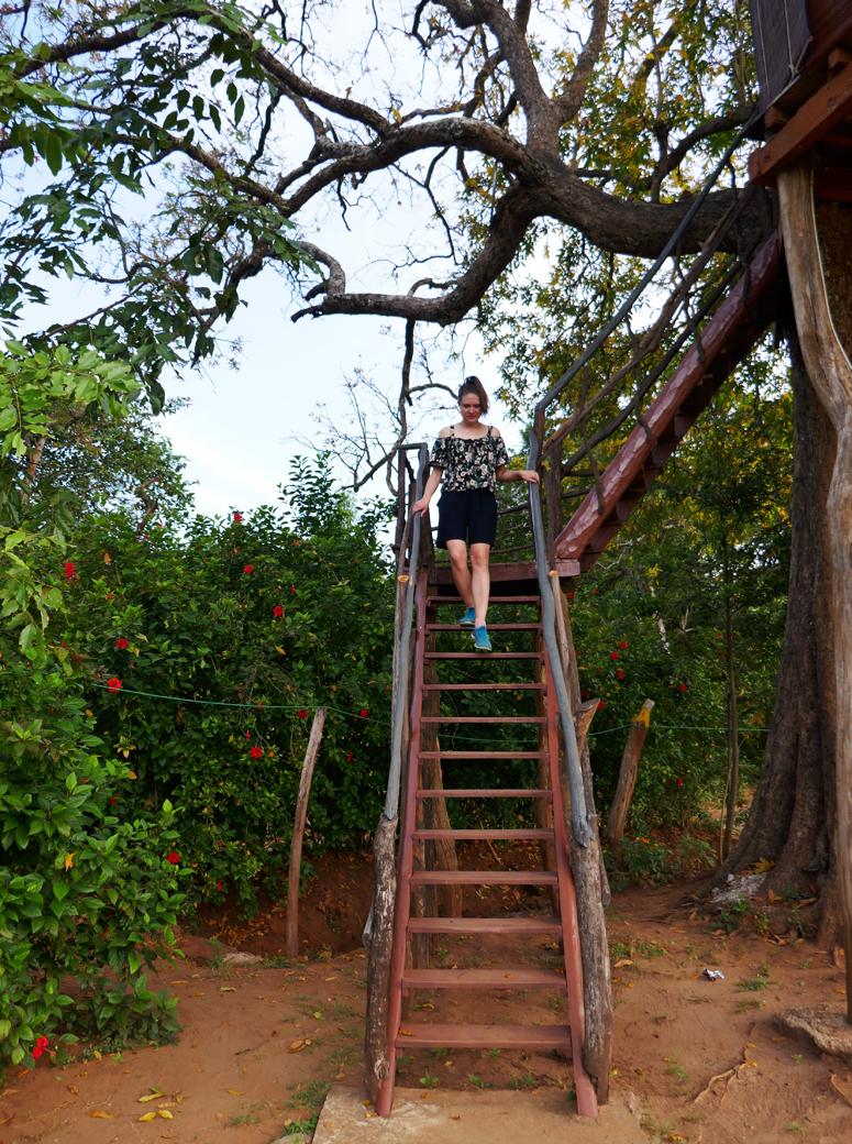 portaita alas puumajasta Sri Lankassa