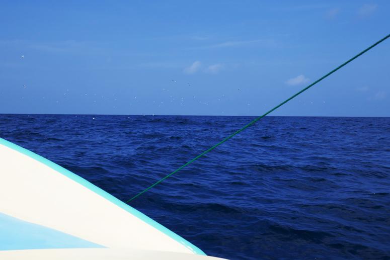 delfiinienkatseluretkellä Kalpitiyassa