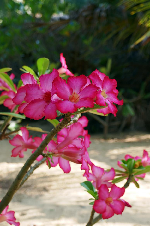 kukkia Palagama Beachilla