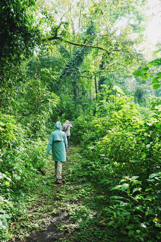 Kakamegan sademetsässä Keniassa