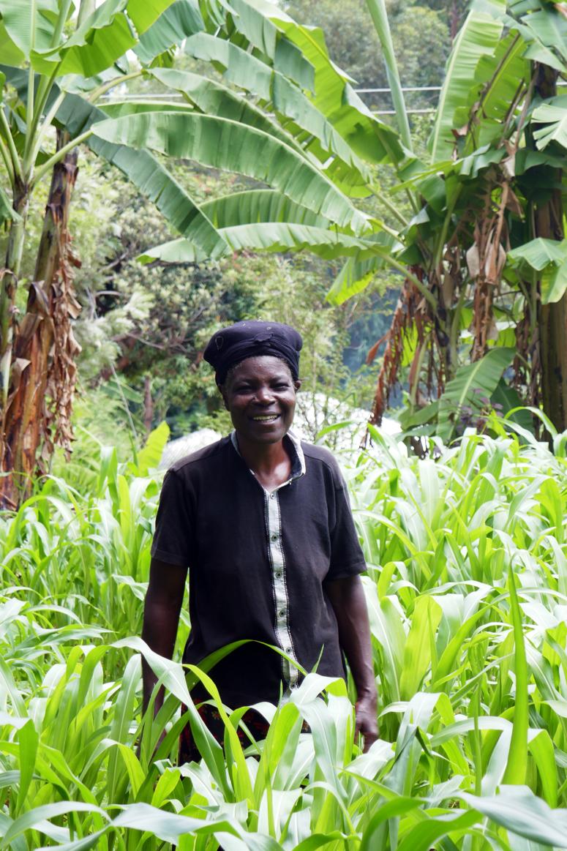 Kenian mamani puutarhassa