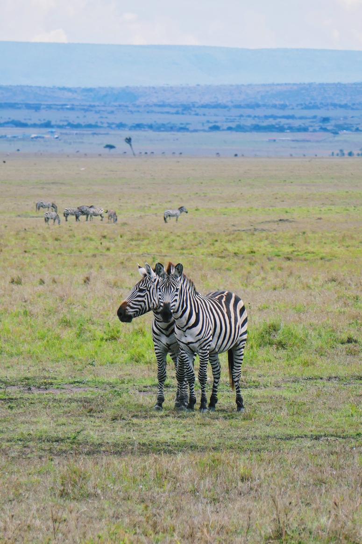 seeprat Masai Marassa