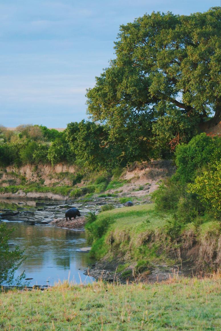virtahepo kiipeää joen pengertä