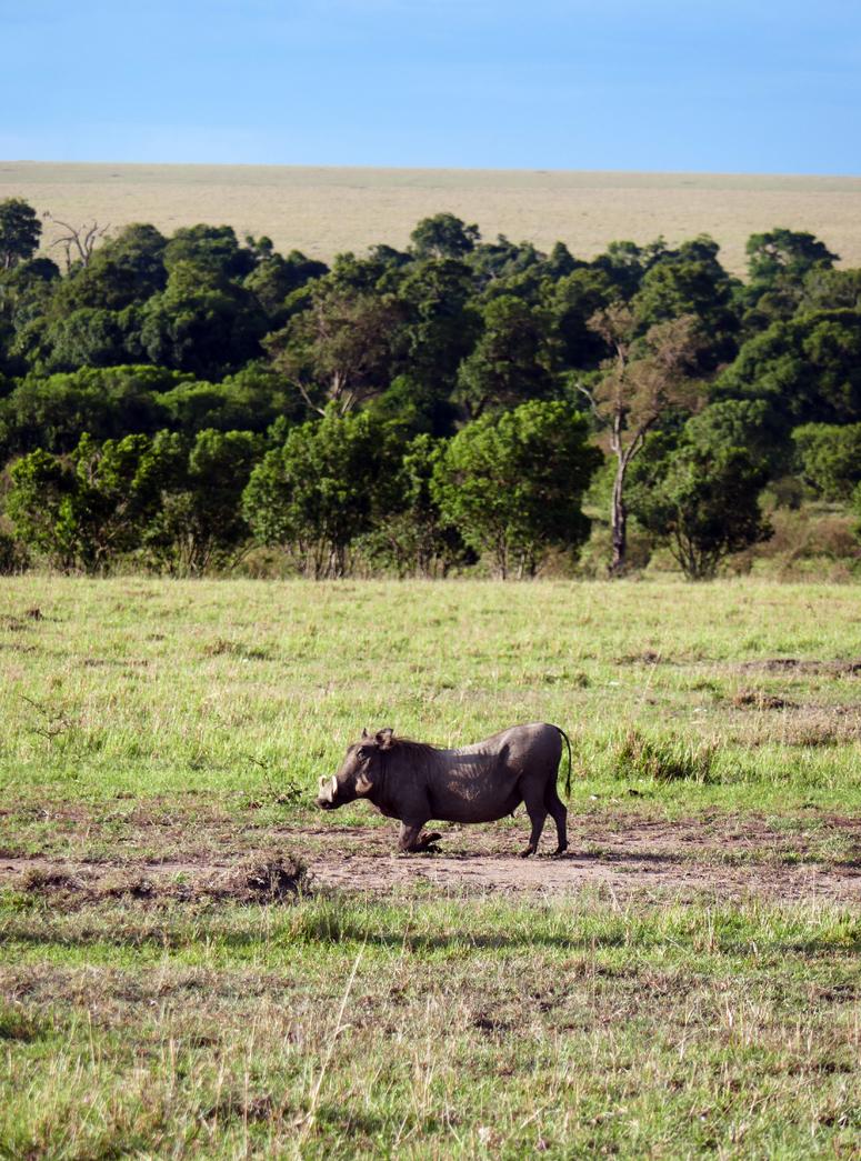 pahkasika Masai Marassa