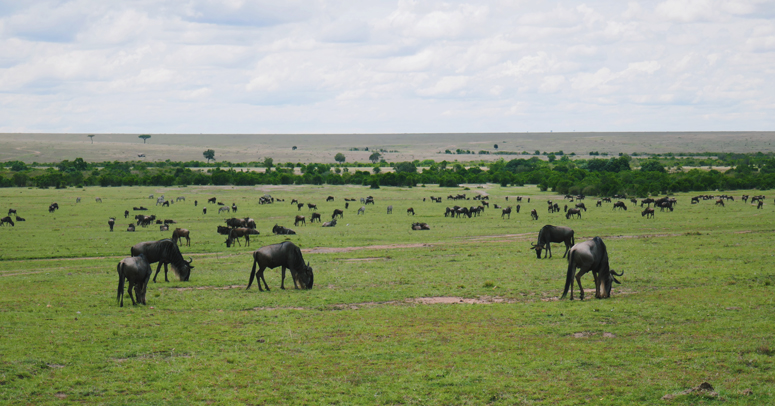 gnuita Masai Marassa
