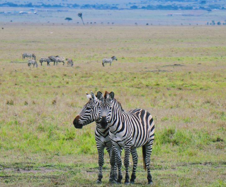 seeproja Masai Marassa