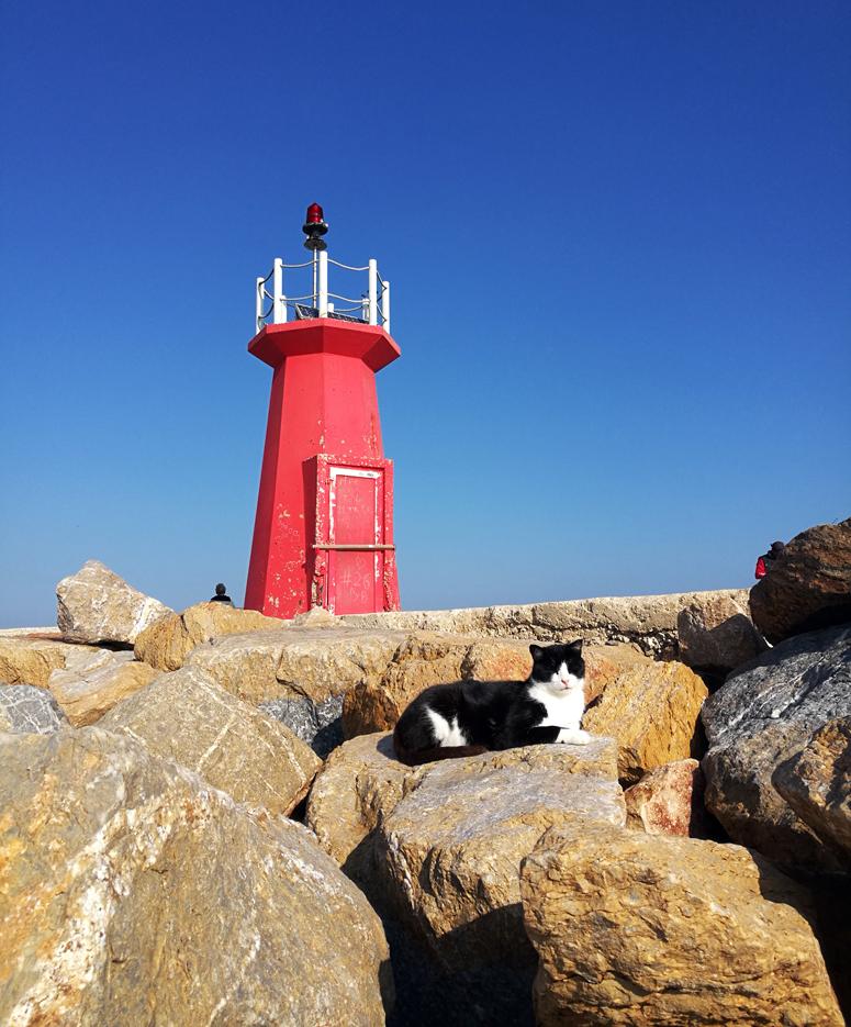 kissa ottaa aurinkoa aallonmurtajalla Costa Blancalla