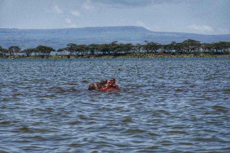virtahepo Naivashan järvessä
