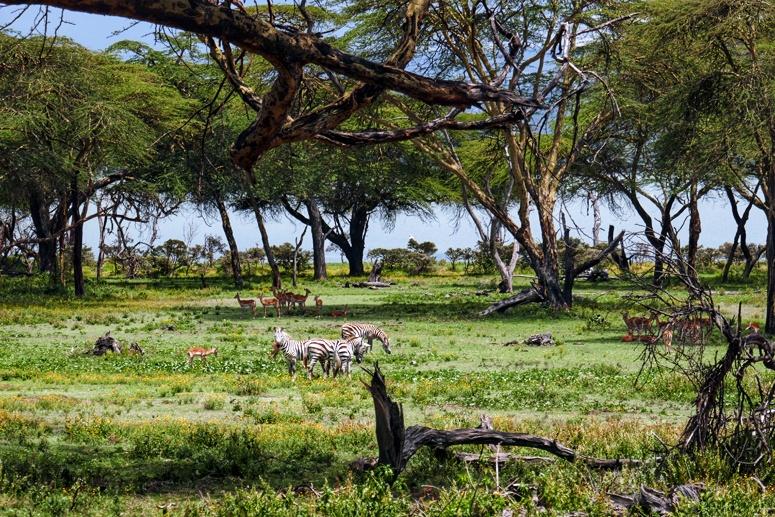 Crescent Islandin kauniita maisemia ja eläimiä