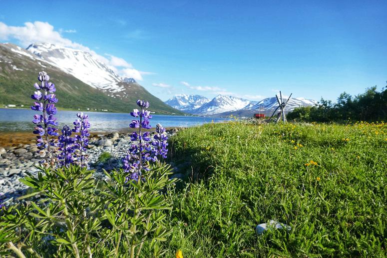 Lyngenin maisemia Pohjois-Norjassa
