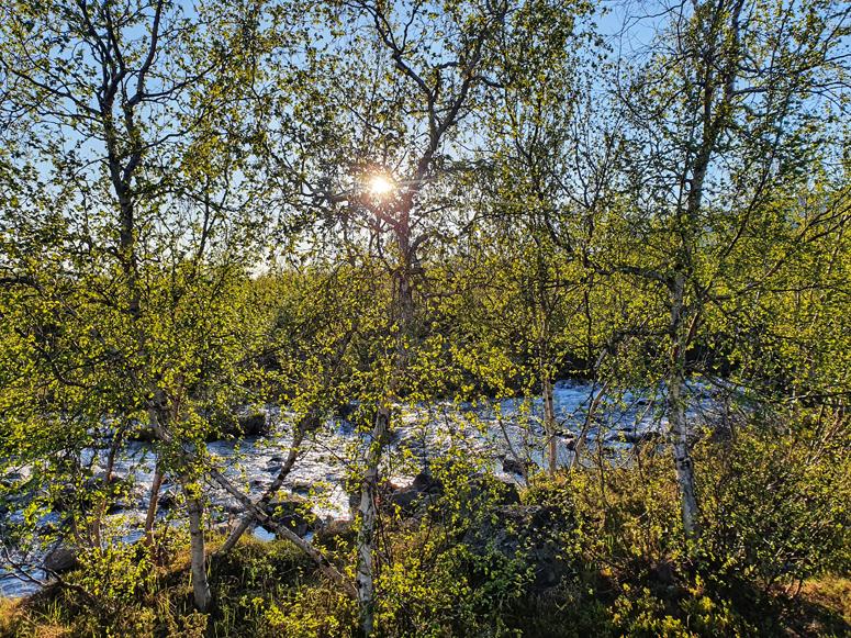 puro Kilpisjärvellä